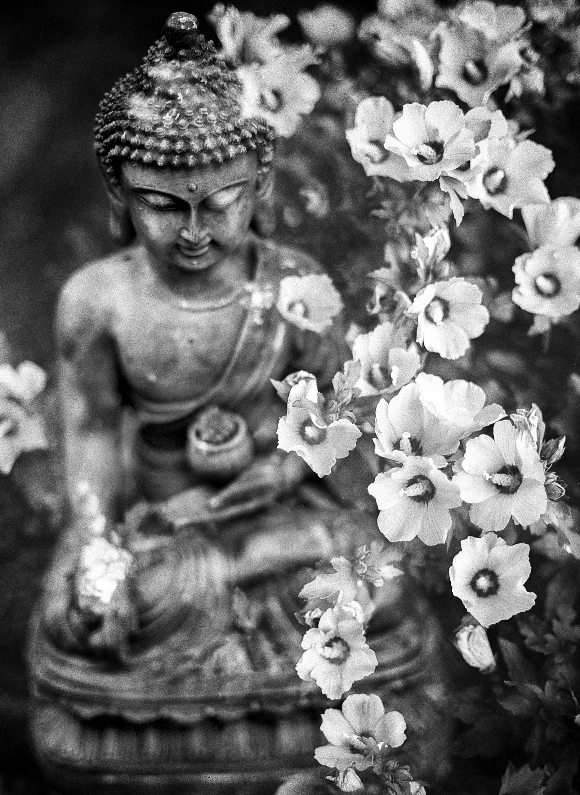 buda_meditacion_curso