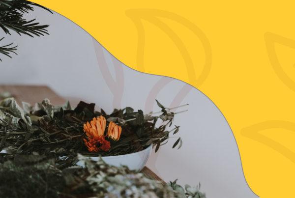 mo_pajtli_iconos